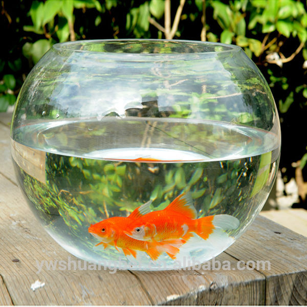 Daad Cheap Beautiful Round Borosilicate Glass Fish Bowl, Aquarium Fish Haanta Waayo Home qorxiyey